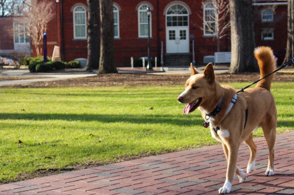 Atticus-Campus-Walk (1280x853)